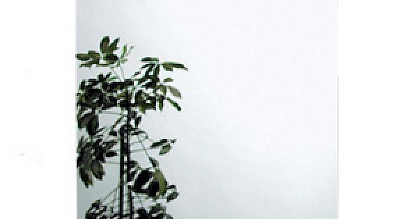 Spiegel Aus Der Serie 1001 Pure
